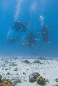 ダイビングで潜る青い海
