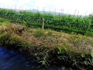 インレー湖の湖上畑