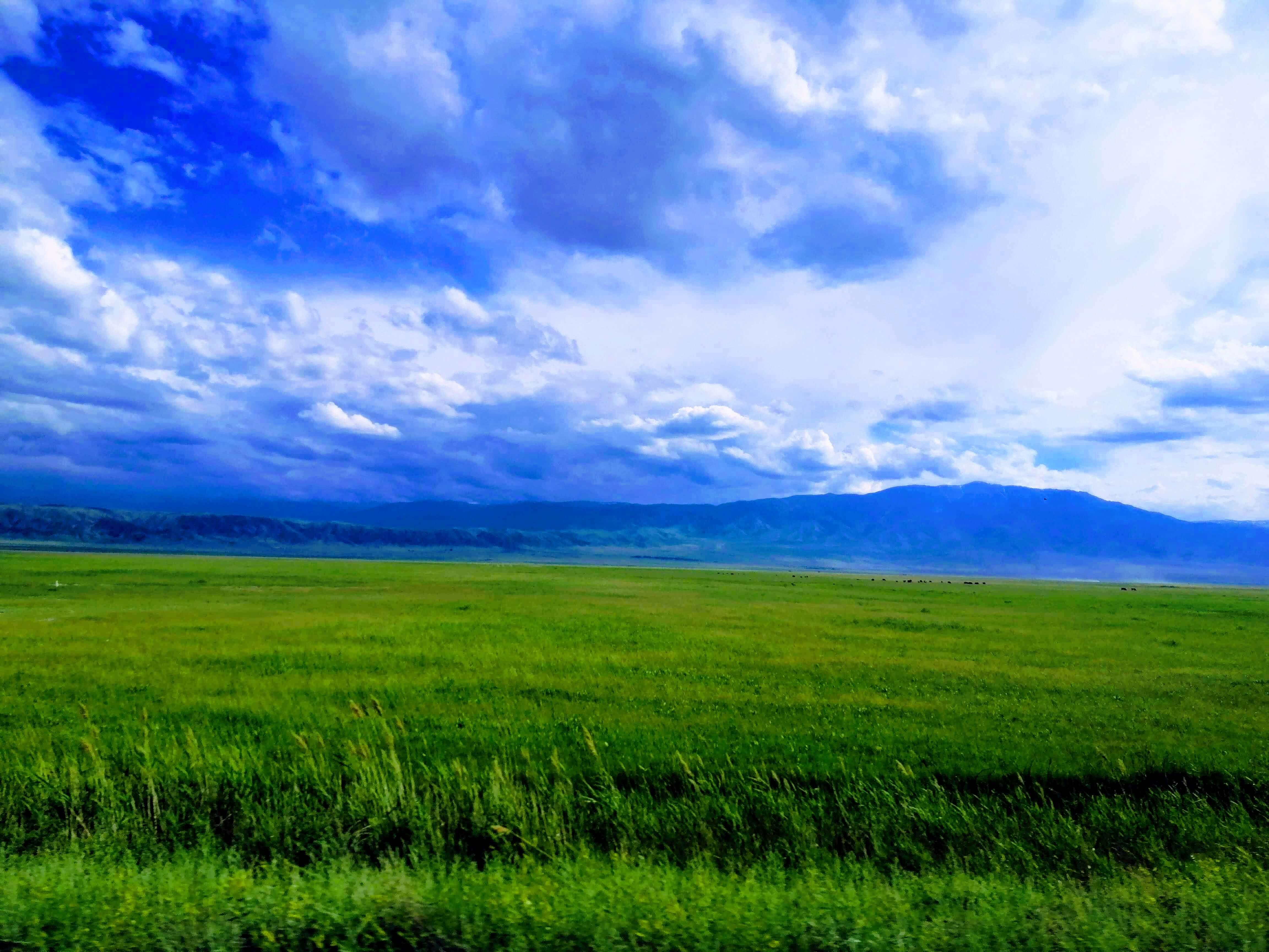 キルギスの青い空と緑の草原