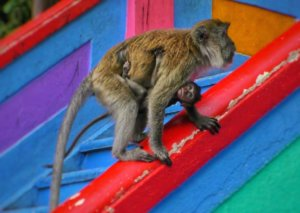 カラフルな階段を登る親子の猿