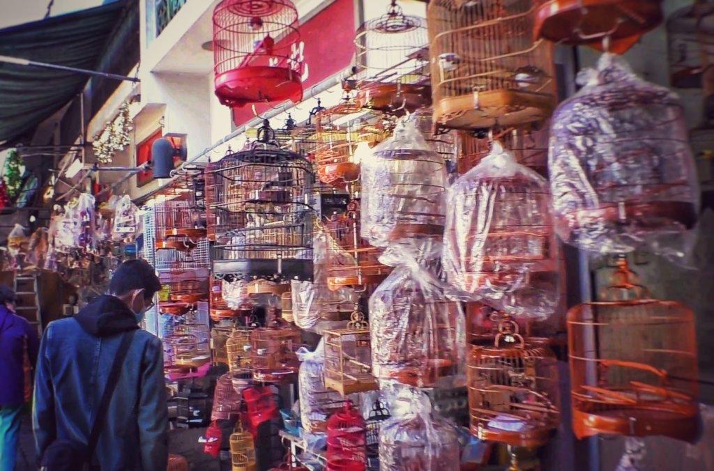 鳥が沢山売られている園圃街雀鳥