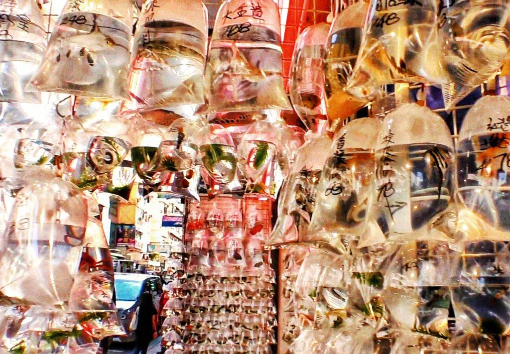 香港の金魚街