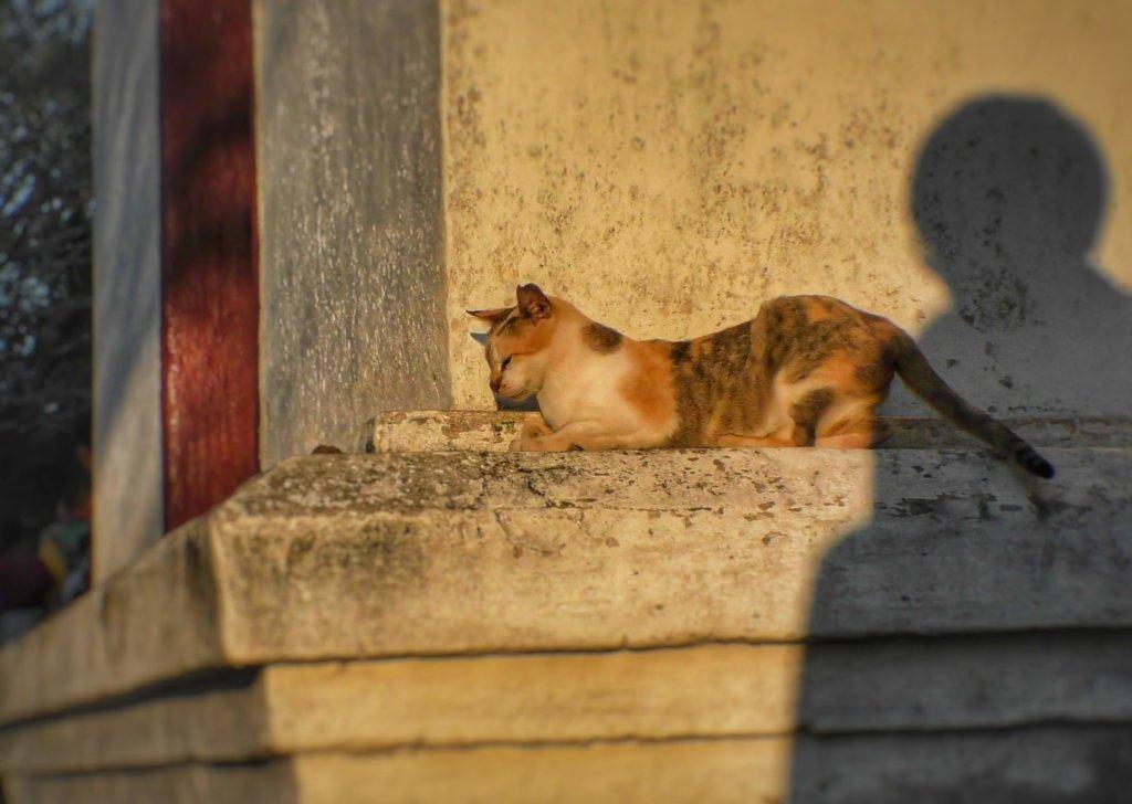 ルアンパバーンと猫