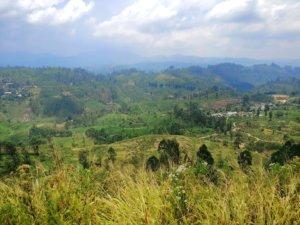 茶畑と霞む山々