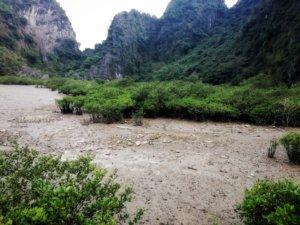 ハロン湾の干潟