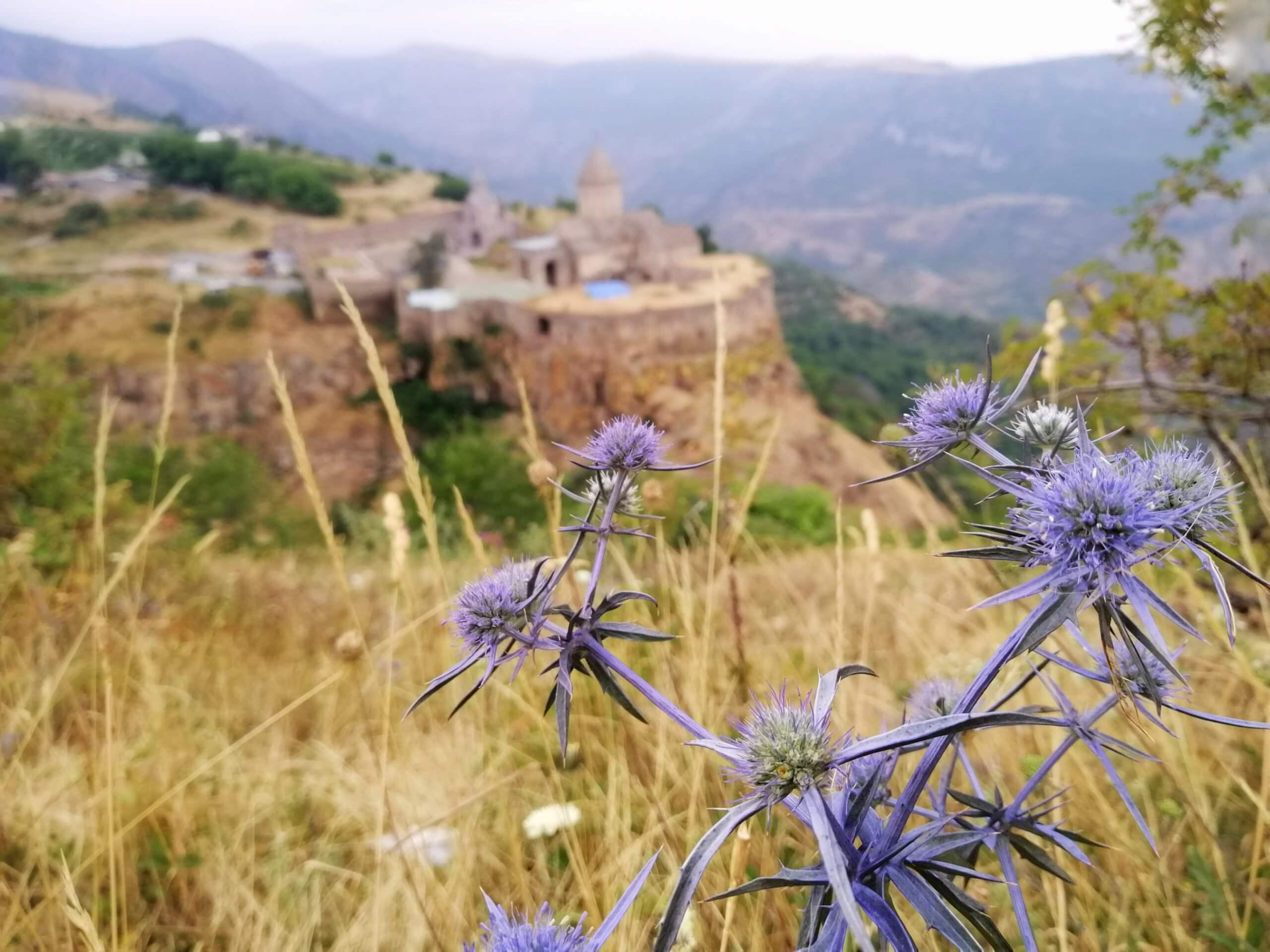 タテヴ:薄紫の花と教会
