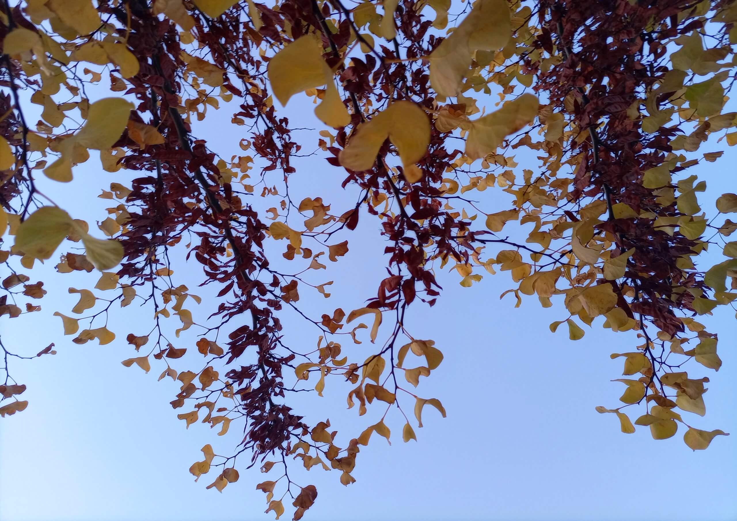 青空と植物:ヨルダン