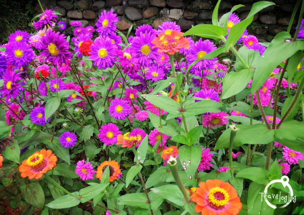 バトゥミ:植物園のオレンジと紫の花
