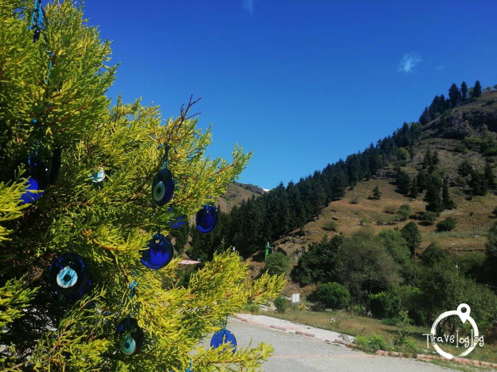 トルコ:ナザルボンジュウの木